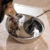 Raindrop Pet Fountain niiiice - $60