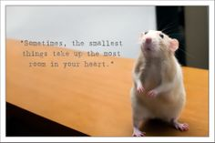 Love is what it's all about.  If you like Marty, please join him on Facebook!  https://www.facebook.com/martymousetherat