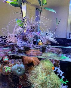Have you seen this amazing tank? How do you feel about plants growing above the water line and have you ever tried it. Saltwater Fish Tanks, Saltwater Aquarium, Planted Aquarium, Marine Fish Tanks, Marine Tank, Coral Reef Aquarium, Marine Aquarium, Home Aquarium, Aquarium Ideas