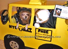 Chihuahua Halloween Costume: William the NYC Taxi Driver… Coolest Halloween Costume Contest