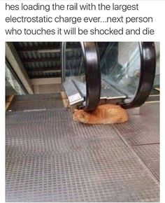 Cats have no limit to how far they'll go to be assholes (@theworldpolice)