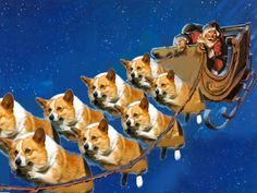 When, what to my wondering eyes should appear, but a miniature sleigh, and eight tiny corgideer...