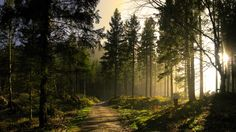 nice Forest Sunbeams In High Quality