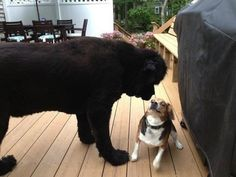 These two friends meeting for the first time. | 41 Pictures You Need To See Before The Universe Ends