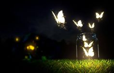 50 Ideas Butterfly Lighting Photography Night For 2019 Photo Facebook, Cover Pics For Facebook, Facebook Header, Fb Cover Photos, Facebook Timeline Covers, Timeline Photos, Twitter Cover Photo, Butterfly Lighting, Twitter Backgrounds