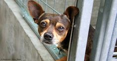 Abused dogs display higher levels of several behavioral characteristics like hyperactivity and aggression towards unfamiliar people and dogs. http://healthypets.mercola.com/sites/healthypets/archive/2015/09/28/abused-dog-behavior.aspx
