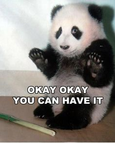 OKay OKay you can have it! #lol #panda #funny