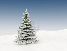 Pine Tree With Snow - Christmas Background Royalty Free Stock Photo, Pictures, Images And Stock Photography. Image 11180110.
