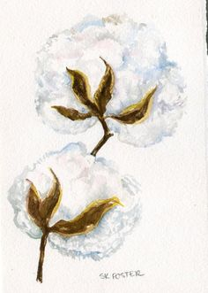 Cotton Bolls original watercolor painting 5 x 7 by SharonFosterArt #artist