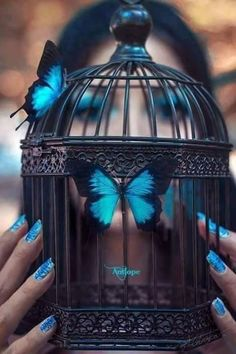 A fun image sharing community. Explore amazing art and photography and share your own visual inspiration! Blue Wallpaper Iphone, Butterfly Wallpaper, Tumblr Wallpaper, Cute Wallpaper Backgrounds, Blue Wallpapers, Love Wallpaper, Blue Butterfly, Galaxy Wallpaper, Butterfly Design