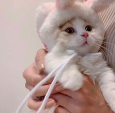 Cute Baby Cats, Cute Little Animals, Kittens Cutest, Cats And Kittens, Cute Babies, Fluffy Animals, Animals And Pets, Small Animals, Cat Icon