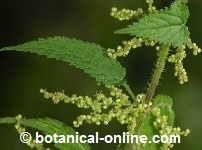 PRECAUCIONES CON LAS PLANTAS MEDICINALES