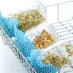 Grow sprouts in a jar