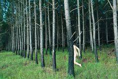 Ryan McGinley: tree / mi piace la serialità degli alberi e il contrasto con il nudo seminascosto che si fa quasi albero