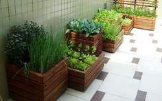 Como produzir horta em casa, horta orgânica em casa, horta orgânica em casa, como cultivar horta orgânica em casa, como cultivar horta orgânica em casa