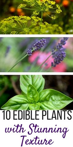 10 Edible Plants with Fascinating Texture and Fragrance in the Garden