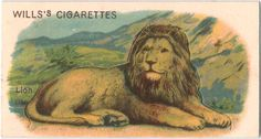 Lion - Animals (Cutouts) series for Will's Cigarettes,from The New York Public Library Digital Collections. Animal Cutouts, Boy Wall Art, Birds Of America, Collectible Cards, Collector Cards, Game Birds, New York Public Library, Old Postcards, Animals Of The World