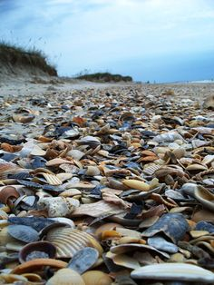 Shackleford Shells - Photo was taken during a family outing to Shackleford Banks, an island near Beaufort, NC. Photograph by Elizabeth Richardson of Stokesdale.
