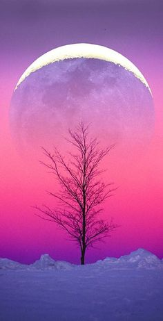 Winter moonrise • photo: Larry Landolfi on 500px. I am in love with this picture because the moon makes the tree hit me in the face with its contrast of colours.