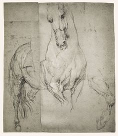 Anthony Van Dyck Studies of a Horse 1633 Black chalk with white chalk highlights on blue paper