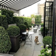 Mid city balcony garden~daytime view - All About Balcony Back Gardens, Small Gardens, Outdoor Gardens, Rooftop Gardens, Outdoor Rooms, Outdoor Living, Outdoor Decor, Backyard Patio, Backyard Landscaping
