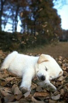 落ち葉に気持ち良さそうに寝てるわんちゃんの画像