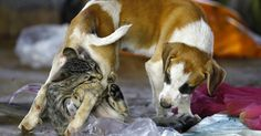 Cat Play With Dog