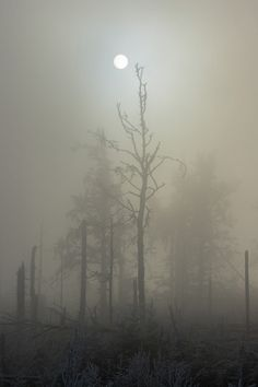 Foggy Winter Moon - Black Forest, Germany