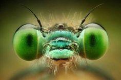 Impactantes fotos macro de insectos