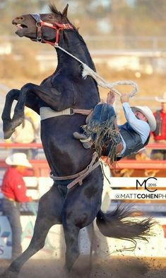 The moment before disaster. That mustang is about to go over backwards, right onto that cowboy. Rodeo Cowboys, Real Cowboys, Cody Rodeo, Cowgirl Pictures, Horse Pictures, Cowboy Photography, Animal Photography, People Photography, Bull Riding