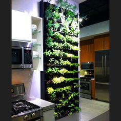 Grow food in your kitchen with aquaponics