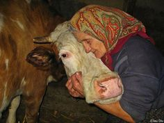 """Old woman with her cow.""""each to his own said the old lady as she kissed the cow"""" a Grandma saying. Amor Animal, Mundo Animal, Beautiful Creatures, Animals Beautiful, Majestic Animals, Farm Animals, Cute Animals, Pretty Animals, Jolie Photo"""