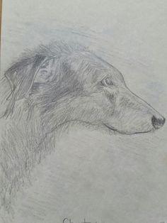 Chester the Deerhound
