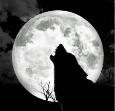 Full-Moon dog