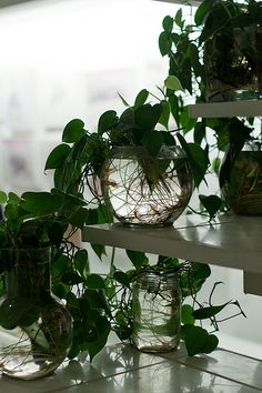 plants in glass bowls