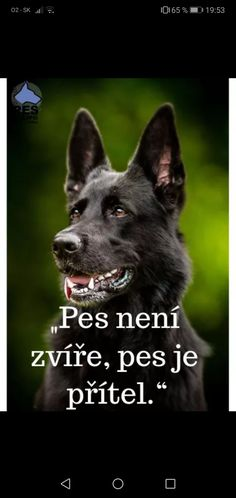 Animals And Pets, Cute Animals, Dogs, Quotes, Animal Pictures, Pets, Pretty Animals, Quotations, Cutest Animals