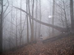 An extremely foggy stroll on the AT approaching Blood Mountain in North Georgia.