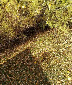 Valoa ja varjoa - ja isännälle töitä takapihalla  #syksy #fall #seasonsoffinland #autumn #pudonneetlehdet #fallenleaves #valo #varjo #light #shadow #syksynvärit #colorsofthefall #gardenlover #ig_garden #garden #lifestyleblogger #nelkytplusblogit #åblogit #ladyofthemess