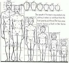 Andrew Loomis' age proportion for drawing  #drawing #art #illustration