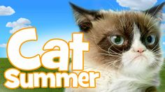 "Grumpy Cat & Friends - Cat Summer The video is from the folks at Friskies Grillers, who are donating one meal of Grillers to shelter cats (up to 1 million meals) for every viewing of ""Cat Summer."""