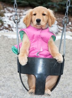 I think bogey would look good in pink!