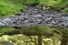 Stream near Rydal lake
