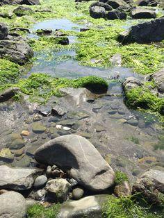 Tide pool Tide Pools, Oregon, Trips, Outdoor Decor, Viajes, Traveling, Travel