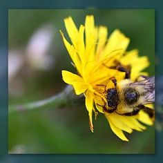 Flowers Use Velcro Cells to Keep #Bees from Blowing Away