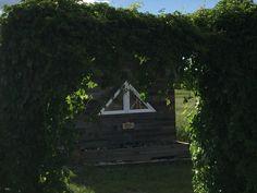 Play house through arbour