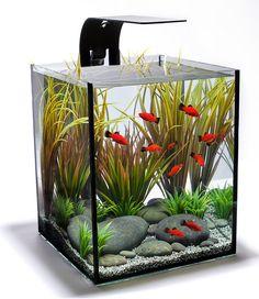 Aquarium Design Group                                                                                                                                                                                 More