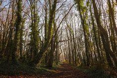Autumnal Light and colour Ridge Hill Woods #7. - Autumn change and light Ridge hill woods Kingswinford Stourbridge.
