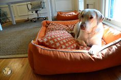 Large Dog Beds and Extra Large Dog Beds | 3 Shades of Dog