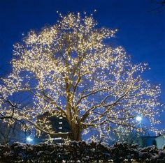 Odense - I absolutely love this tree that is lit close to Hans Christian Andersen's house around Christmas