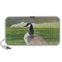 Goose at the waterfront, Wildlife Animals, Nature Mini Speakers http://www.zazzle.com/goose_at_the_waterfront_wildlife_animals_nature_speaker-166678512985593635?rf=238290304201005220&tc=pifa